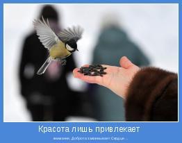 внимание, Доброта завоевывает Сердце ...