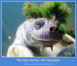 черепахи и рогов на голове зайца. Дзен