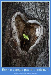 жизни, то и в жизни растёт Любовь!