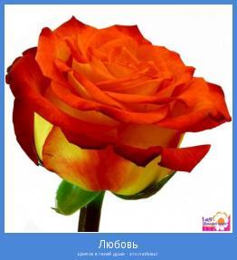 Цветок в твоей душе - это любовь!