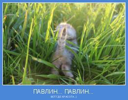 ВОТ ГДЕ КРАСОТА..)