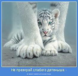 он может оказаться сыном тигра