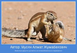 Животные дерутся, ругаются, но потом обязательно спариваются
