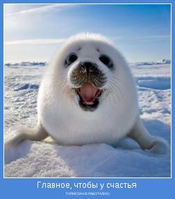 ТОРМОЗА НЕ РАБОТАЛИ!))