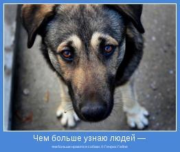 тем больше нравятся собаки. © Генрих Гейне
