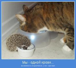 мы можем есть из одной миски... у нас - один мир!